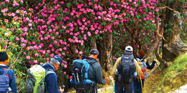 Trekking in Sikkim is one of best ideas because it lets you explore some of the unknown parts of this northern-east region with the scenic meadows, marvelous slopes, mountain passes, lush greenery, shimming lakes and distant valleys.